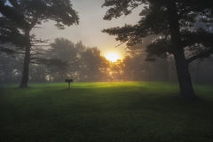 Sunrise Under Fog Thatcher Park. Sunrise under fog at a lone grilling area in thatcher park New York royalty free stock photos