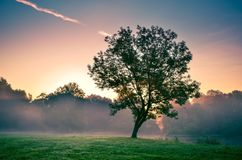 Sunrise in the urban park. Stock Photo