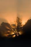 Sunrise  - vertical. Sunrise through the tree - vertical Royalty Free Stock Image
