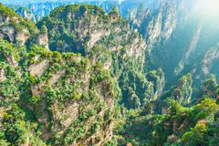 Sunrise view of the colorful cliffs in Zhangjiajie Forest Park. Royalty Free Stock Images