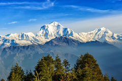 Sunrise view from Poon hill. Beautiful landscape photo of Dhaulagiri mountains from Poon hill stock photos