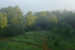 A sunrise view through the web of the knitter-spider royalty free stock photo