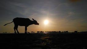 Sunrise at village Stock Image
