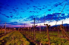 Sunrise at vineyard Stock Photo