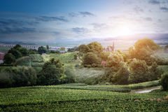 Sunrise on vineyard in France Stock Image