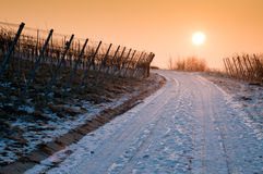 Sunrise in a vineyard with vines in winter Royalty Free Stock Photography