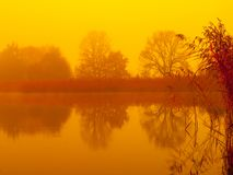 Sunrise at the water. Trees reflection in the pond on foggy morning. Orange mood royalty free stock photo