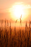 Sunrise on wheat field Stock Photo