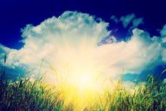 Sunrise on the wheat field instagram stile royalty free stock photos