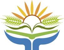 Sunrise wheat logo. Illustration art of a sunrise wheat logo with isolated background Stock Image