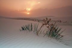 Sunrise in White Dunes National Monument Stock Image