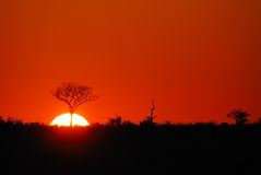 Sunrise in the wild. Beautiful sunrise in the African bush (South Africa Royalty Free Stock Image