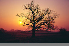 Sunrise in winter Royalty Free Stock Photography