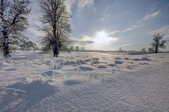 Sunrise in winter Stock Image