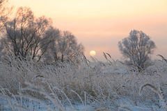 Sunrise in winter Royalty Free Stock Image