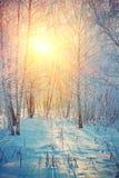 Sunrise in winter birch forest instagram stile Stock Photos