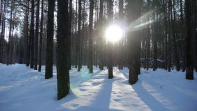 Sunrise in the winter forest.  stock video footage