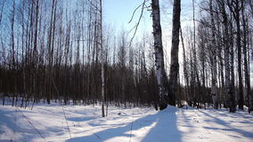 Sunrise in the winter forest stock video footage