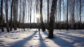 Sunrise in the winter forest stock video