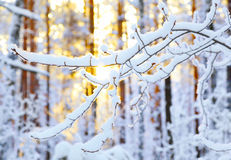 Sunrise in winter forest Royalty Free Stock Photography