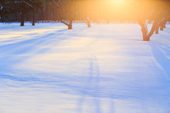 Sunrise in a winter garden with long shadows Royalty Free Stock Images