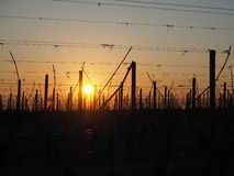 Sunrise in the winter on the hills of the vineyards near Lake Garda stock images
