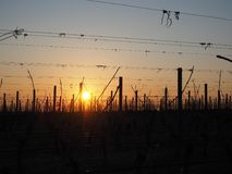 Sunrise in the winter on the hills of the vineyards near Lake Garda royalty free stock photos