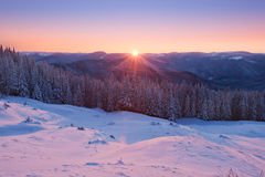 Sunrise in the winter mountains. Magenta sunrise in the winter mountains covered with snow in East Carpathians Royalty Free Stock Photo