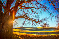 Sunrise winter. Winter sunrise near a tree without leaves.Clear sky and rhymes Stock Image