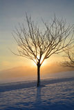 Sunrise in winter with tree and fog Stock Photo