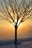 Sunrise in winter with tree Stock Photography