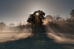 Sunrise over Yarra Valley In Winter Stock Photography