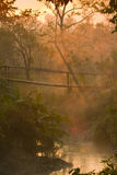 Sunrise on wooden bridge in middle of jungle Stock Photography