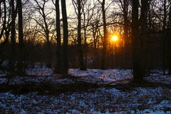 Sunrise in the woods so graceful. In February Stock Photos