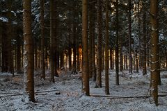 Sunrise in the woods in winter Royalty Free Stock Photos