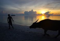 Sunrise with a Yak Stock Image