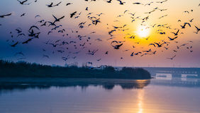 Sunrise at Yamuna Ghat Stock Image