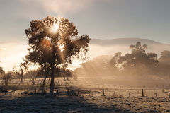 Sunrise In The Yarra Valley In Winter Royalty Free Stock Photo