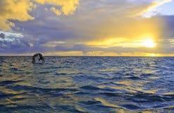 Sunrise yoga on paddle board Royalty Free Stock Image