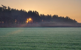 Sunrise on young rye field Stock Photo