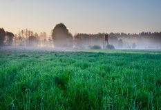 Sunrise on young rye field Royalty Free Stock Image