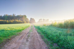 Sunrise on young rye field Royalty Free Stock Photos
