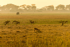 Sunrise in zambia Stock Images