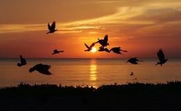 Sunrises op het overzees stock afbeelding