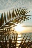 sunrises op zee stock foto