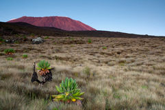Sunrising на Килиманджаро Стоковые Изображения RF