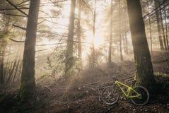 Sunrist леса с велосипедом Стоковая Фотография