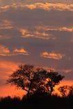 Sunrize in Elephant Plains. Beautiful orange winter Sunrise in Elephant Plains nature reserve Stock Image