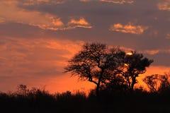 Sunrize en plaines d'éléphant photographie stock