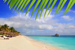 Sunroof maya la Caraïbe de palmiers de plage de la Riviera Photo stock